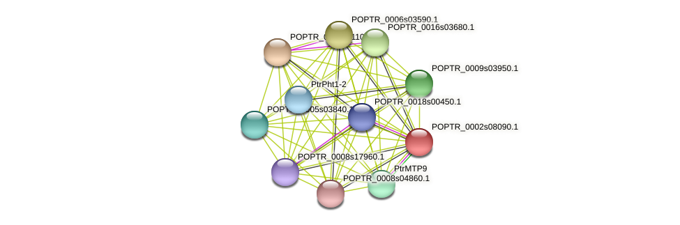 POPTR_0002s08090.1 protein (Populus trichocarpa) - STRING interaction network