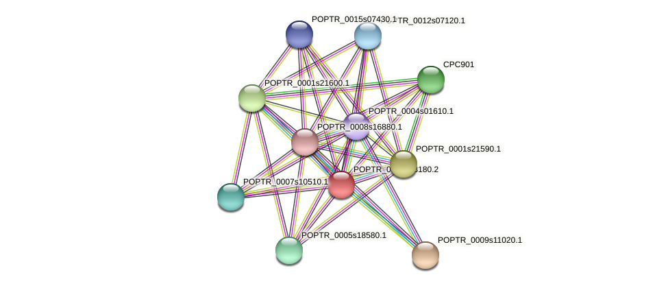 POPTR_0002s08180.1 protein (Populus trichocarpa) - STRING interaction network