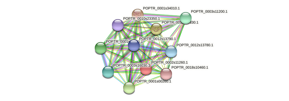 POPTR_0002s11260.1 protein (Populus trichocarpa) - STRING interaction network