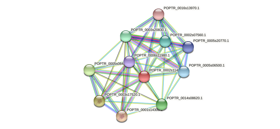 POPTR_0002s11430.1 protein (Populus trichocarpa) - STRING interaction network