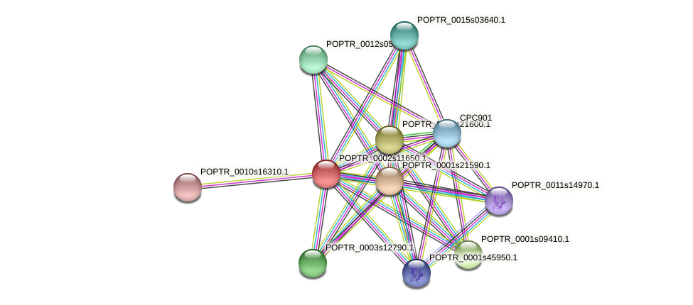 POPTR_0002s11650.1 protein (Populus trichocarpa) - STRING interaction network