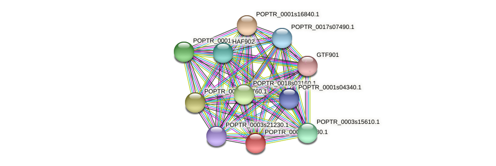 POPTR_0002s12080.1 protein (Populus trichocarpa) - STRING interaction network