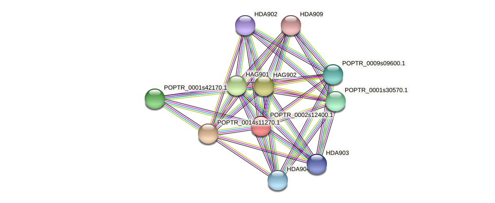POPTR_0002s12400.1 protein (Populus trichocarpa) - STRING interaction network