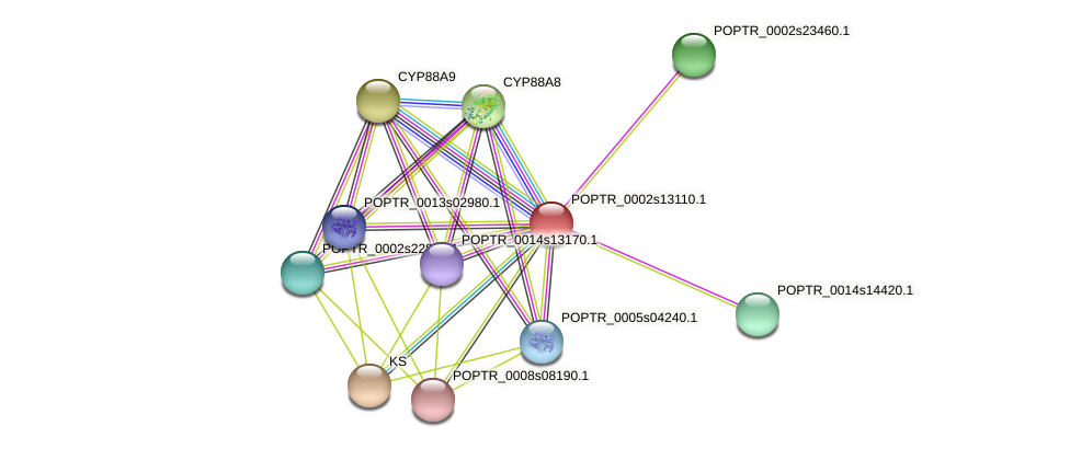 POPTR_0002s13110.1 protein (Populus trichocarpa) - STRING interaction network