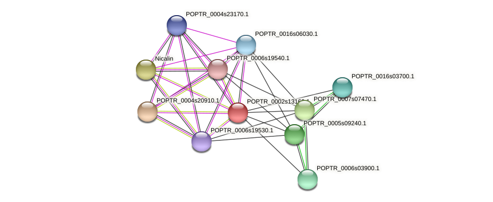 POPTR_0002s13160.1 protein (Populus trichocarpa) - STRING interaction network