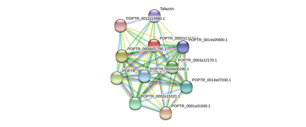 POPTR_0002s13420.1 protein (Populus trichocarpa) - STRING interaction network