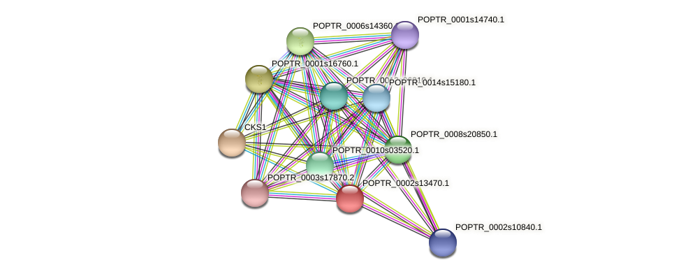 POPTR_0002s13470.1 protein (Populus trichocarpa) - STRING interaction network