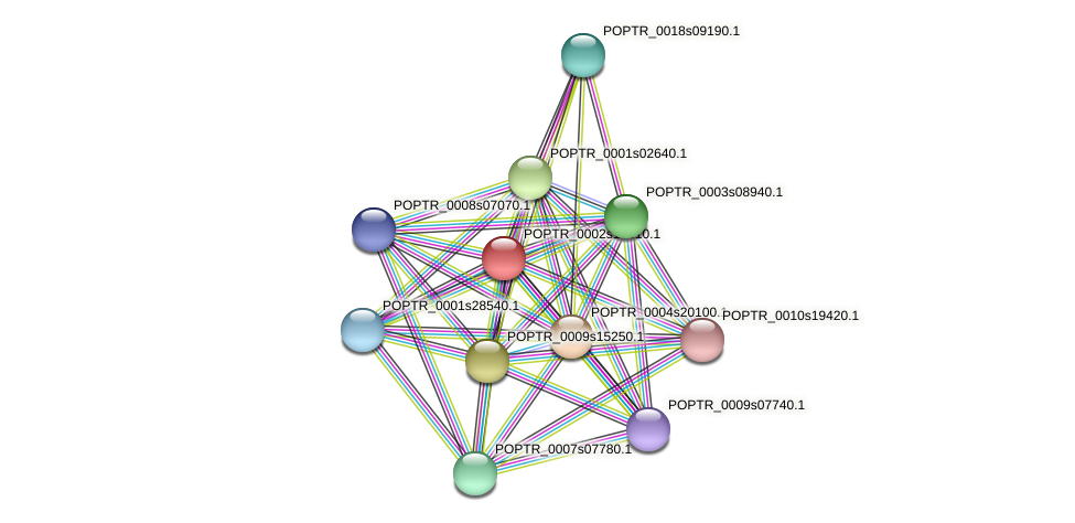 POPTR_0002s13610.1 protein (Populus trichocarpa) - STRING interaction network