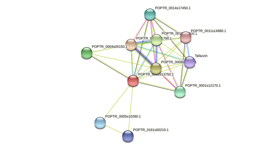 POPTR_0002s13750.1 protein (Populus trichocarpa) - STRING interaction network