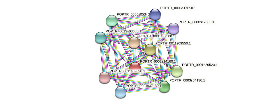 POPTR_0002s14160.1 protein (Populus trichocarpa) - STRING interaction network