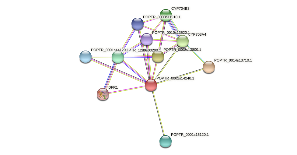 POPTR_0002s14240.1 protein (Populus trichocarpa) - STRING interaction network