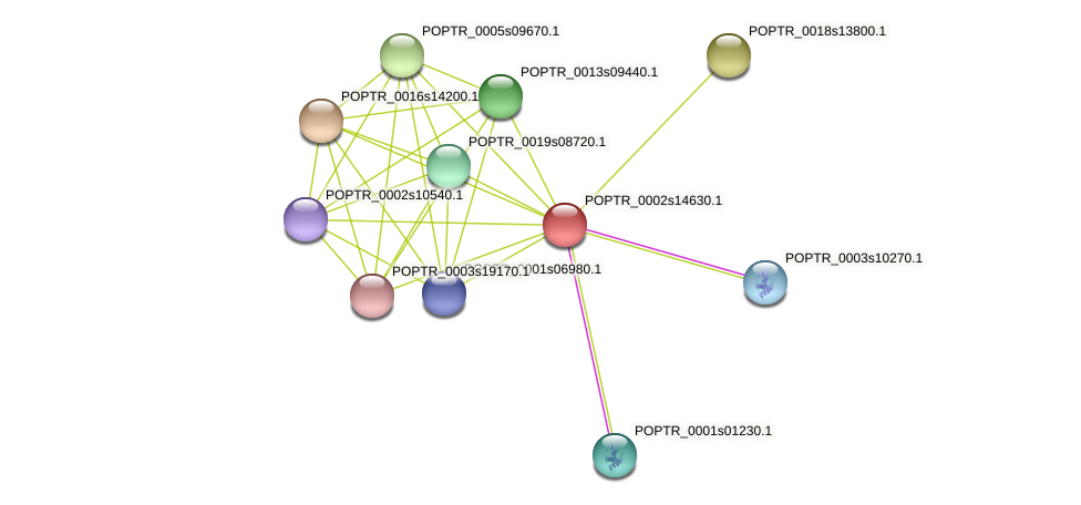 POPTR_0002s14630.1 protein (Populus trichocarpa) - STRING interaction network