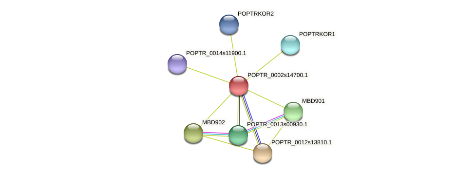 POPTR_0002s14700.1 protein (Populus trichocarpa) - STRING interaction network