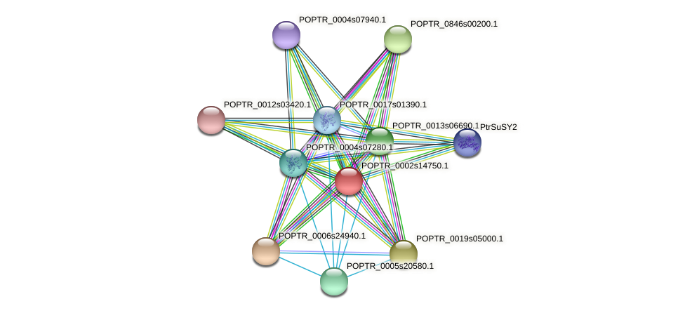 POPTR_0002s14750.1 protein (Populus trichocarpa) - STRING interaction network