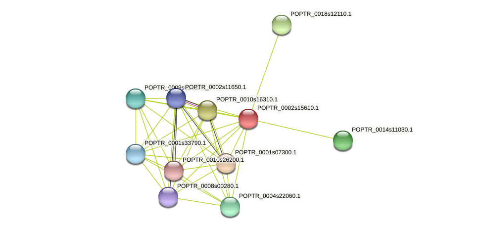 POPTR_0002s15610.1 protein (Populus trichocarpa) - STRING interaction network