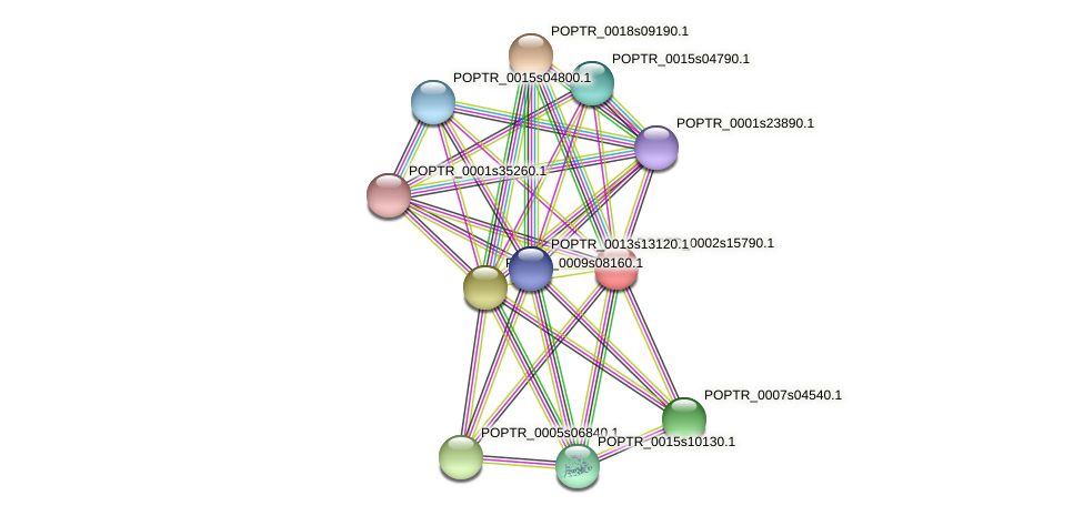 POPTR_0002s15790.1 protein (Populus trichocarpa) - STRING interaction network