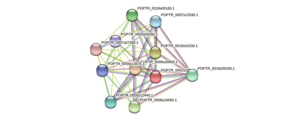 POPTR_0002s16030.1 protein (Populus trichocarpa) - STRING interaction network