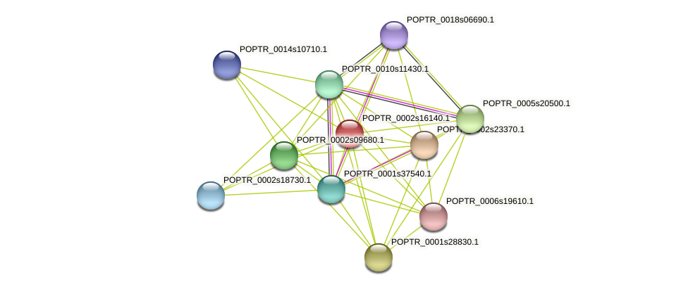 POPTR_0002s16140.1 protein (Populus trichocarpa) - STRING interaction network