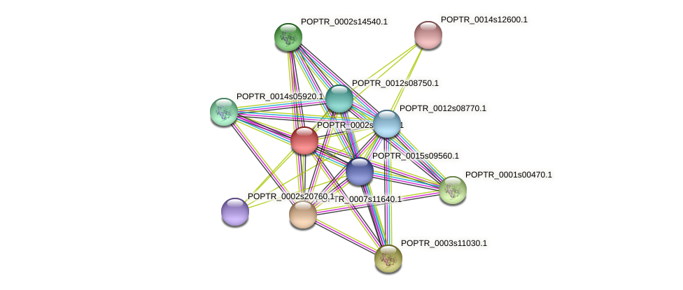 POPTR_0002s16210.1 protein (Populus trichocarpa) - STRING interaction network