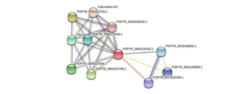 POPTR_0002s16310.1 protein (Populus trichocarpa) - STRING interaction network
