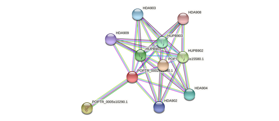 POPTR_0002s16480.1 protein (Populus trichocarpa) - STRING interaction network