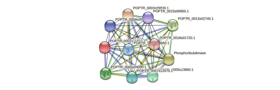POPTR_0002s16850.1 protein (Populus trichocarpa) - STRING interaction network
