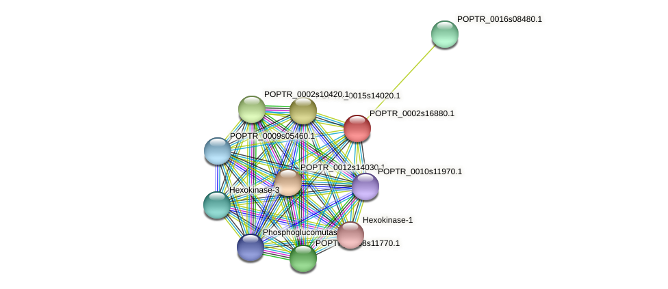 POPTR_0002s16880.1 protein (Populus trichocarpa) - STRING interaction network