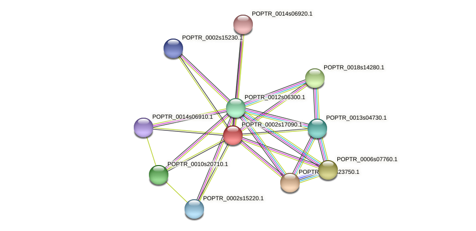 POPTR_0002s17090.1 protein (Populus trichocarpa) - STRING interaction network