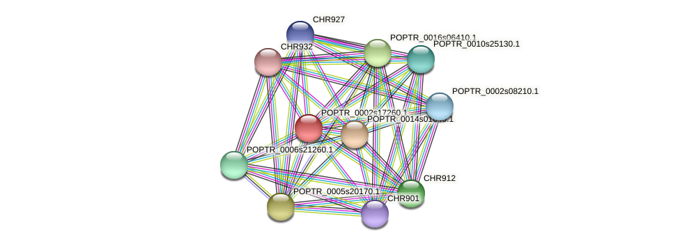 POPTR_0002s17260.1 protein (Populus trichocarpa) - STRING interaction network