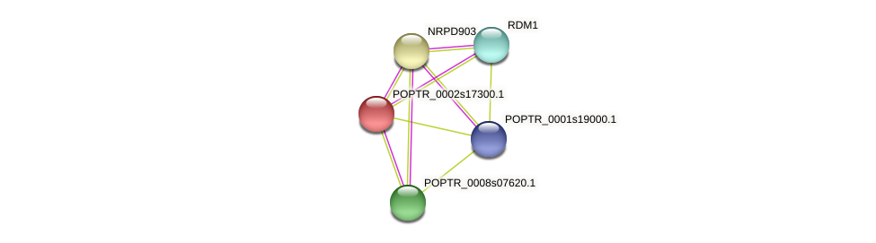 POPTR_0002s17300.1 protein (Populus trichocarpa) - STRING interaction network