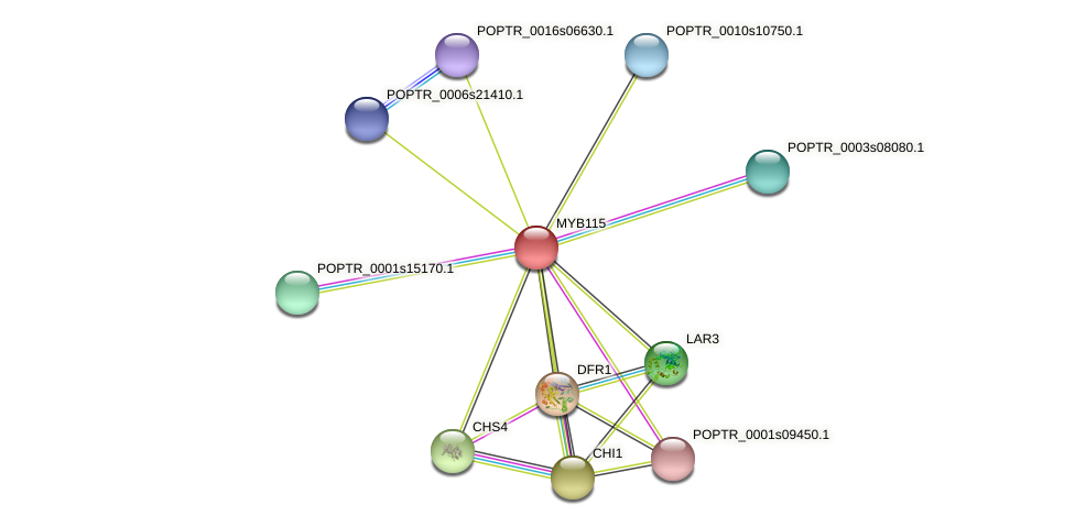 POPTR_0002s17460.1 protein (Populus trichocarpa) - STRING interaction network