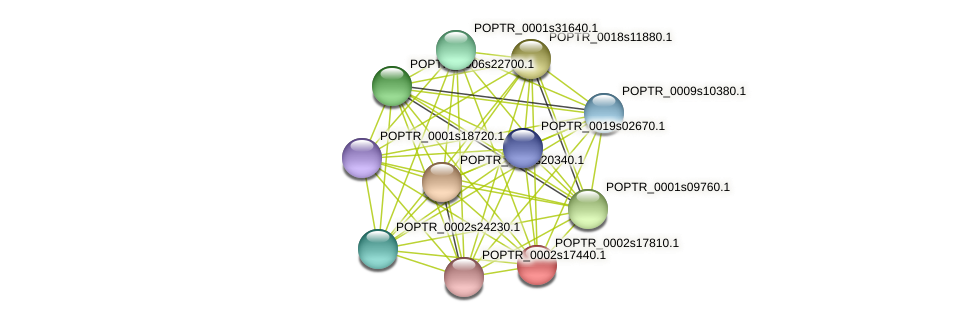 POPTR_0002s17810.1 protein (Populus trichocarpa) - STRING interaction network