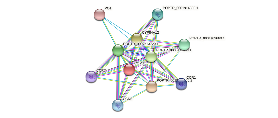 POPTR_0002s18150.1 protein (Populus trichocarpa) - STRING interaction network