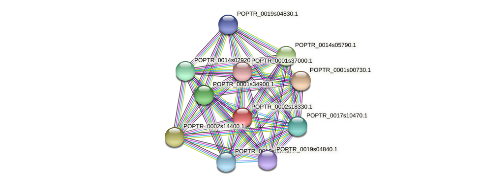 POPTR_0002s18330.1 protein (Populus trichocarpa) - STRING interaction network