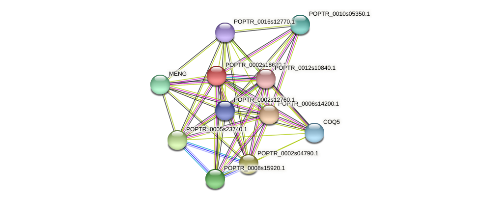 POPTR_0002s18630.1 protein (Populus trichocarpa) - STRING interaction network