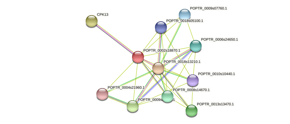 POPTR_0002s18870.1 protein (Populus trichocarpa) - STRING interaction network