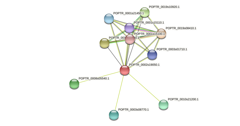 POPTR_0002s19050.1 protein (Populus trichocarpa) - STRING interaction network
