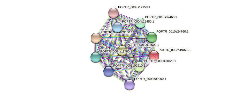 POPTR_0002s19070.1 protein (Populus trichocarpa) - STRING interaction network