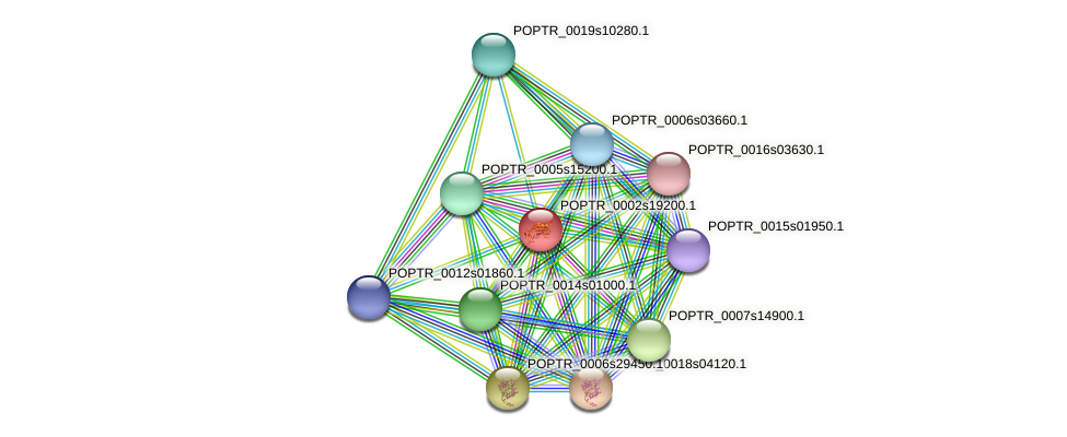 POPTR_0002s19200.1 protein (Populus trichocarpa) - STRING interaction network