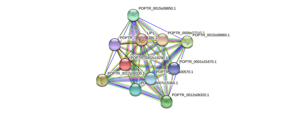 POPTR_0002s19290.1 protein (Populus trichocarpa) - STRING interaction network