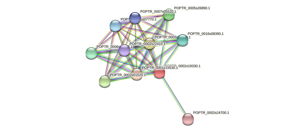 POPTR_0002s19330.1 protein (Populus trichocarpa) - STRING interaction network