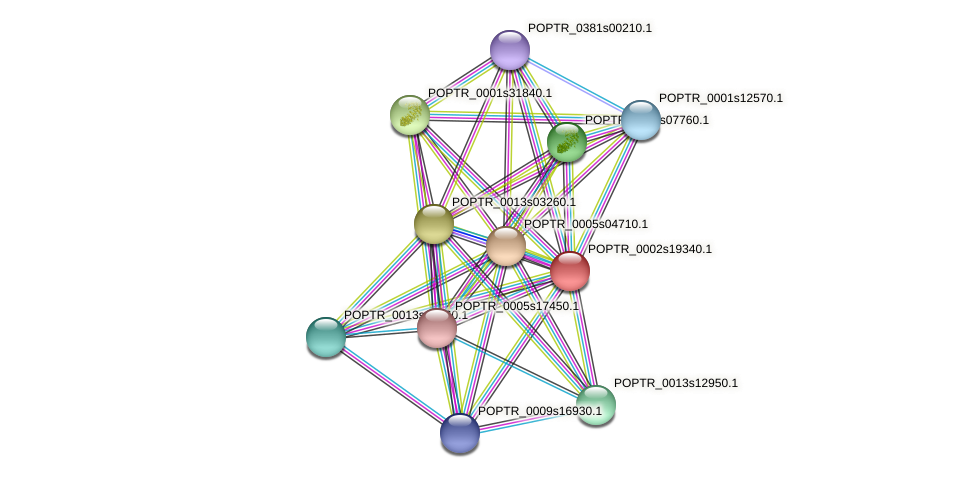 POPTR_0002s19340.1 protein (Populus trichocarpa) - STRING interaction network