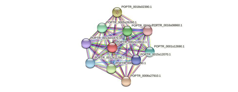 POPTR_0002s19910.1 protein (Populus trichocarpa) - STRING interaction network