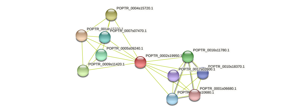 POPTR_0002s19950.1 protein (Populus trichocarpa) - STRING interaction network