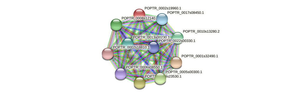 POPTR_0002s19960.1 protein (Populus trichocarpa) - STRING interaction network
