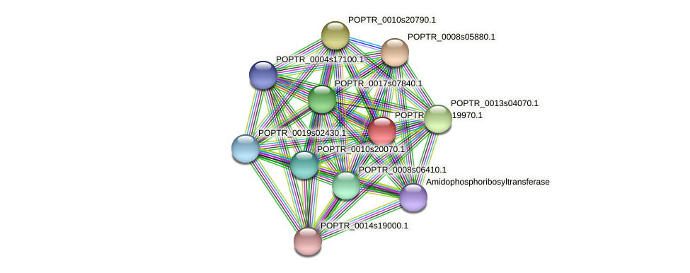 POPTR_0002s19970.1 protein (Populus trichocarpa) - STRING interaction network