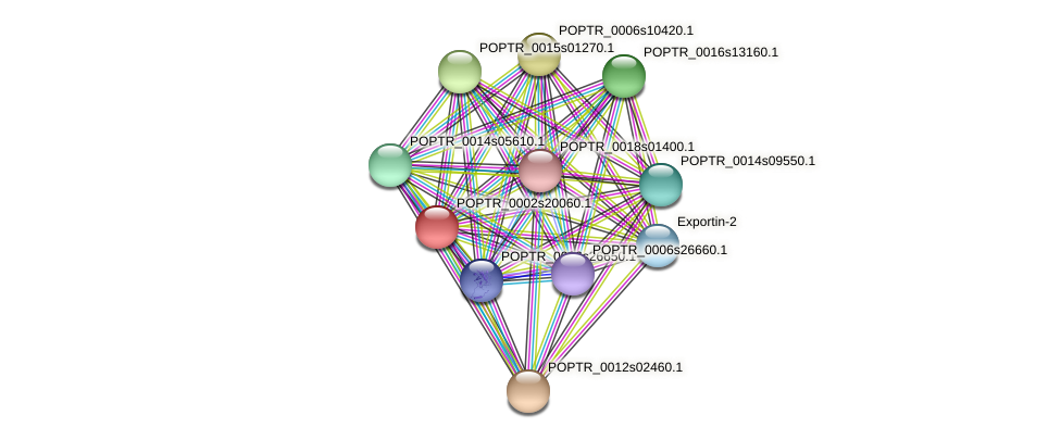 POPTR_0002s20060.1 protein (Populus trichocarpa) - STRING interaction network