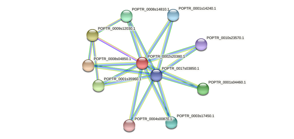 POPTR_0002s20380.1 protein (Populus trichocarpa) - STRING interaction network