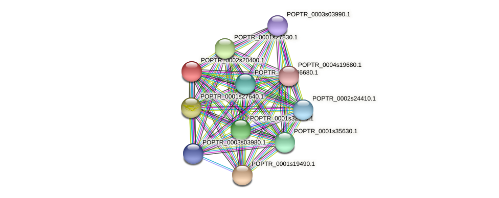 POPTR_0002s20400.1 protein (Populus trichocarpa) - STRING interaction network