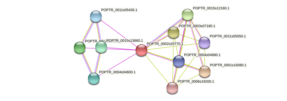 POPTR_0002s20770.1 protein (Populus trichocarpa) - STRING interaction network